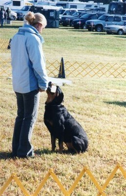 Colonial K Dog Training