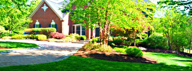 how to choose a lawn care company